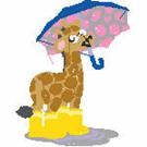 Giraffes-2972