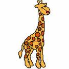 Giraffes-2974